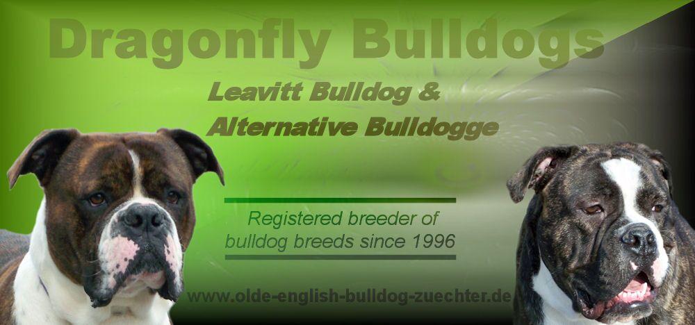 bannerdragonflybulldogs21.jpg
